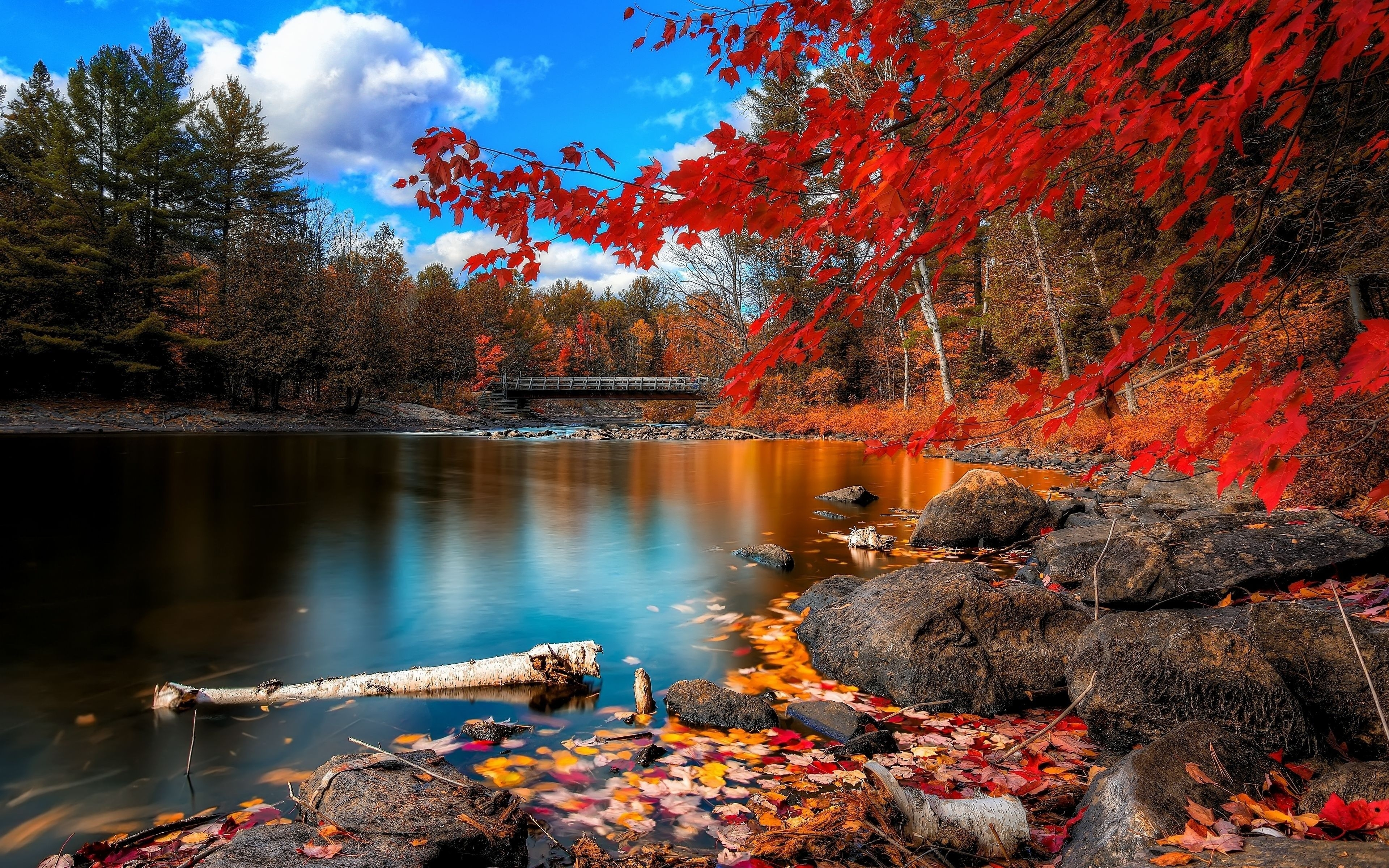 fall wallpaper desktop background ~ sdeerwallpaper | nature
