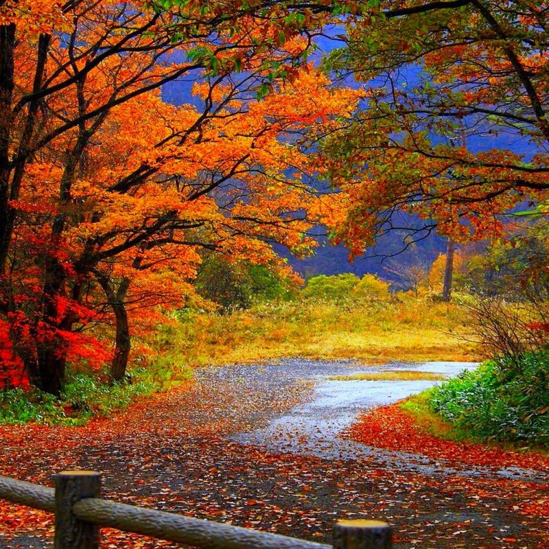 10 Best High Definition Autumn Wallpaper FULL HD 1920×1080 For PC Background 2018 free download fall wallpaper high definition free download subwallpaper 800x800