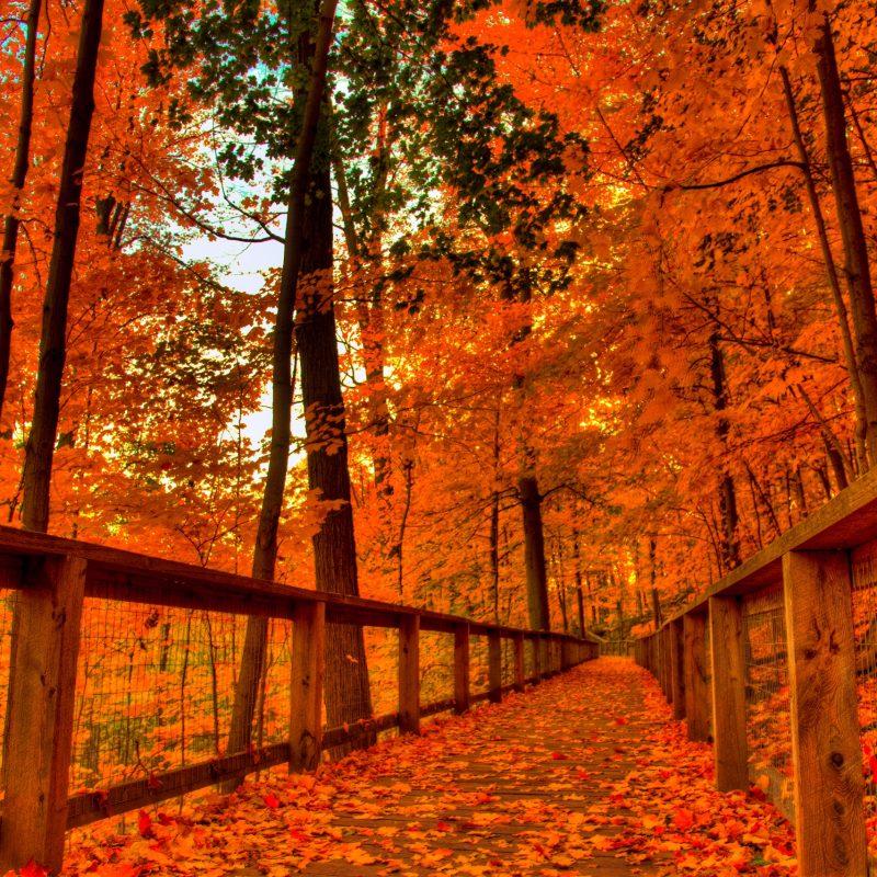 10 Top Fall Colors Wallpaper Background FULL HD 1920×1080 For PC Desktop 2020 free download fall wallpaper natures wallpapers pinterest fall wallpaper 800x800