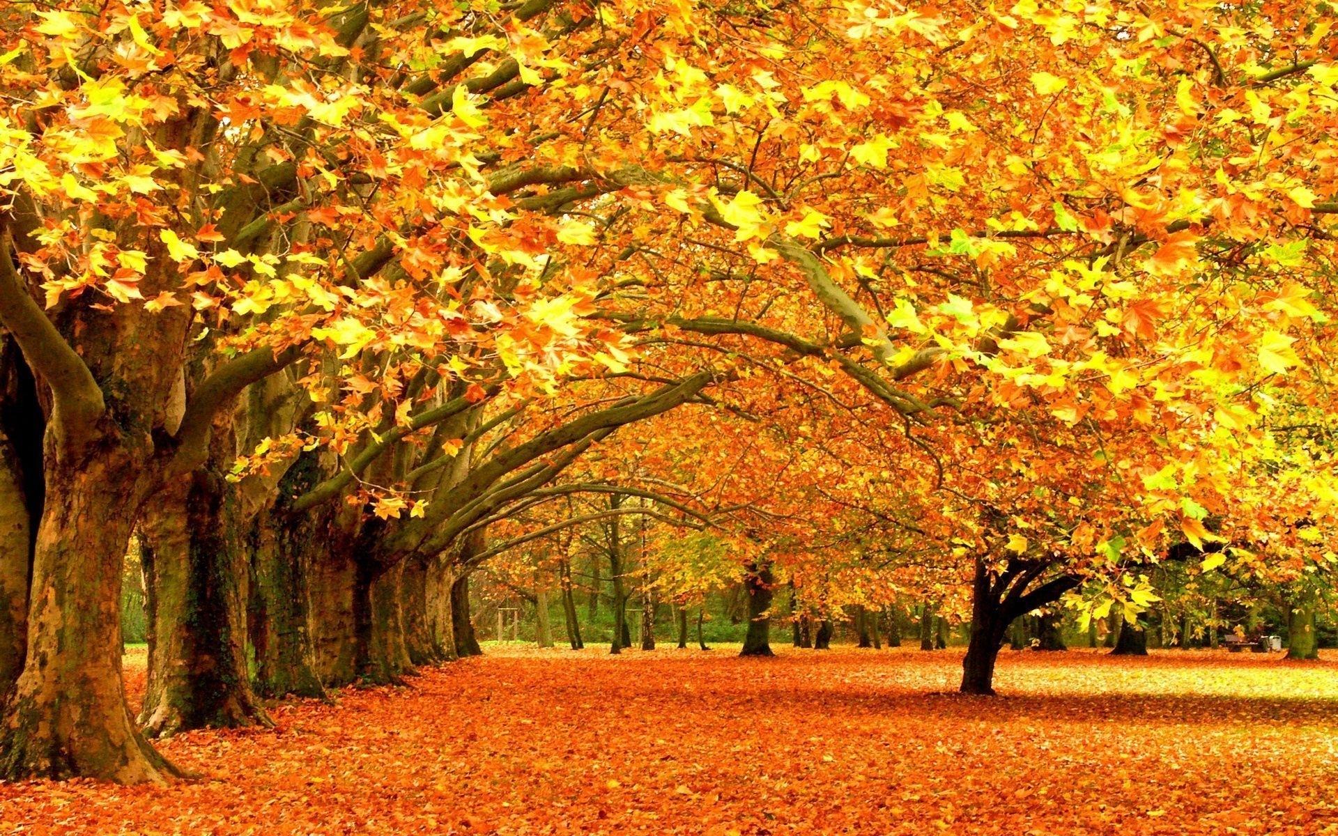 fall wallpapers desktop group (85+)