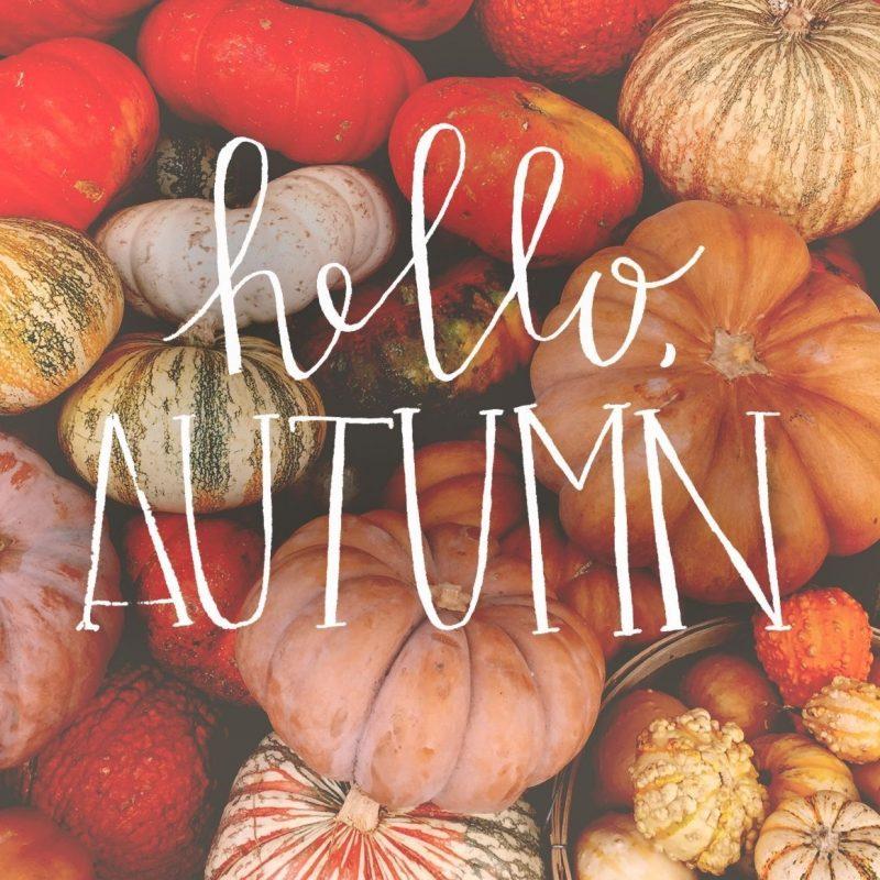 10 New Autumn Pumpkin Desktop Wallpaper FULL HD 1920×1080 For PC Background 2018 free download fall wallpapers desktop group 85 3 800x800