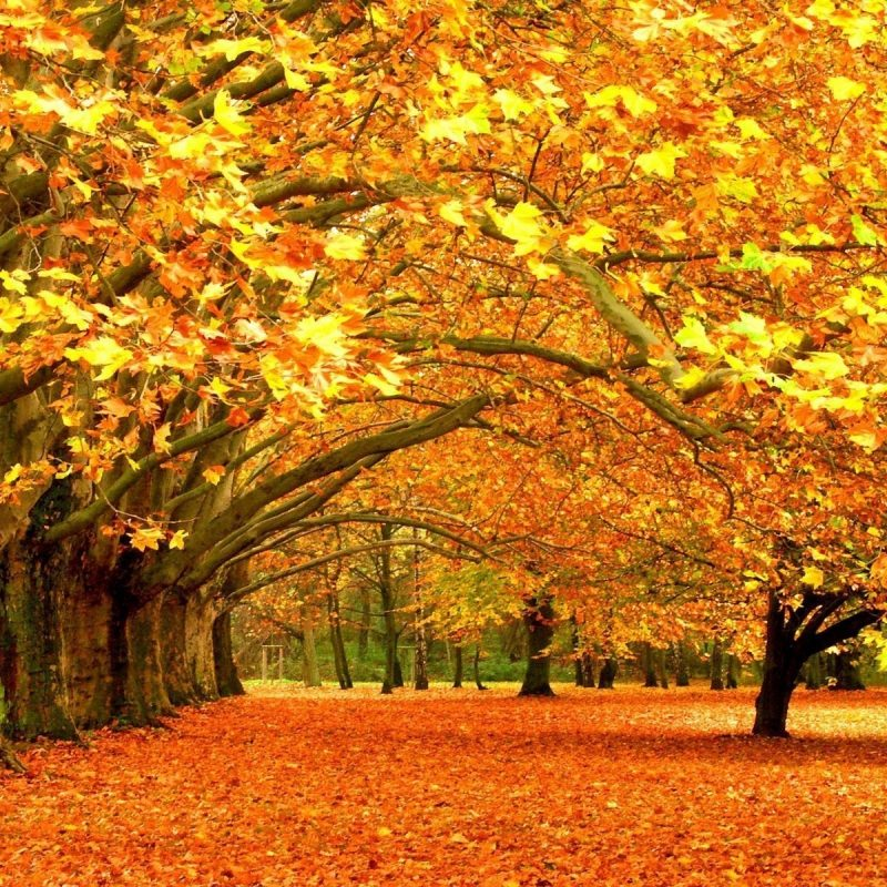 10 Latest Fall Colors Desktop Wallpaper FULL HD 1080p For PC Desktop 2020 free download fall wallpapers desktop group 85 4 800x800