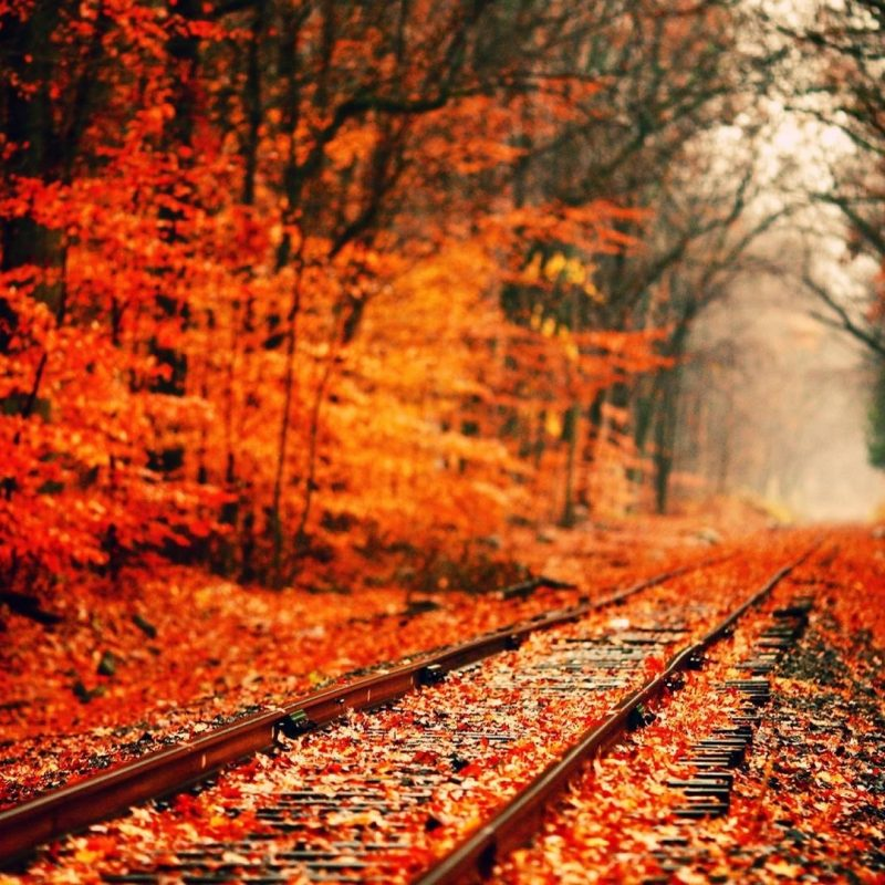 10 Latest Pretty Fall Backgrounds Desktops FULL HD 1920×1080 For PC Background 2020 free download fall wallpapers wallpaper cave 800x800