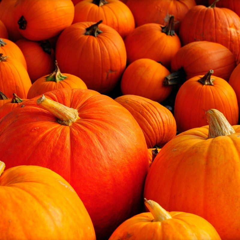 10 New Fall Wallpaper With Pumpkins FULL HD 1920×1080 For PC Background 2020 free download fall wallpapers with pumpkins 57 images 800x800