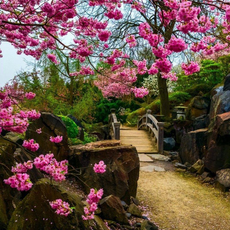 10 New Japanese Garden Desktop Wallpaper FULL HD 1080p For PC Background 2020 free download fantasy garden wallpaper hd download of beautiful japanese garden 1 800x800