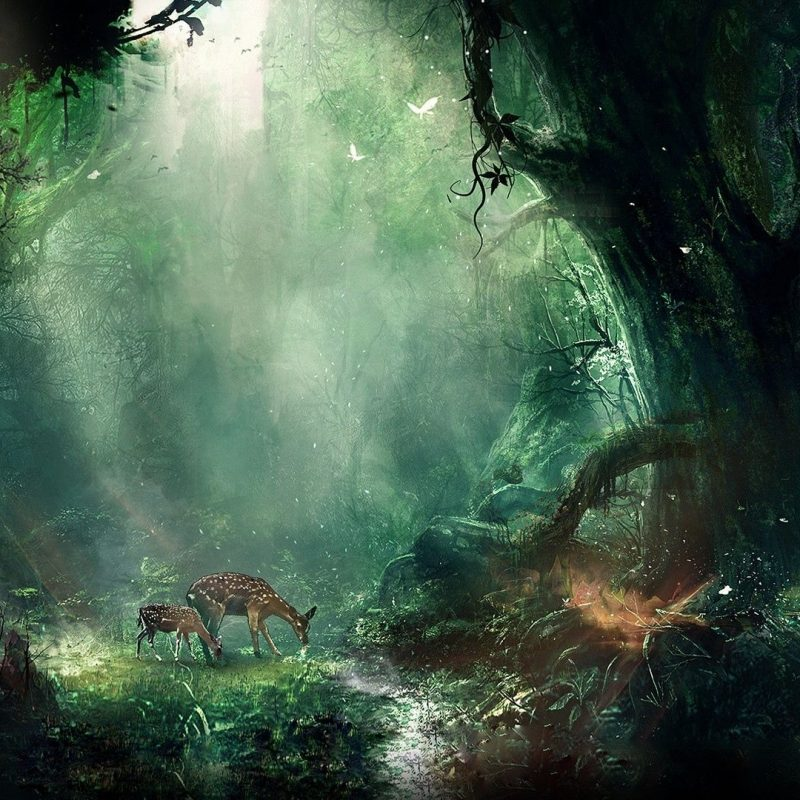 10 Best Hd Wallpapers 1920X1080 Fantasy FULL HD 1080p For PC Background 2021 free download fantasy wallpapers hd 1920x1080 group 81 800x800