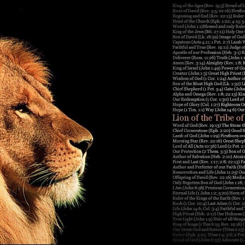 10 Most Popular Lion Of The Tribe Of Judah Pictures FULL HD 1920×1080 For PC Desktop 2021 free download feeding on christ a biblical theology of the tribe of judah 800x800