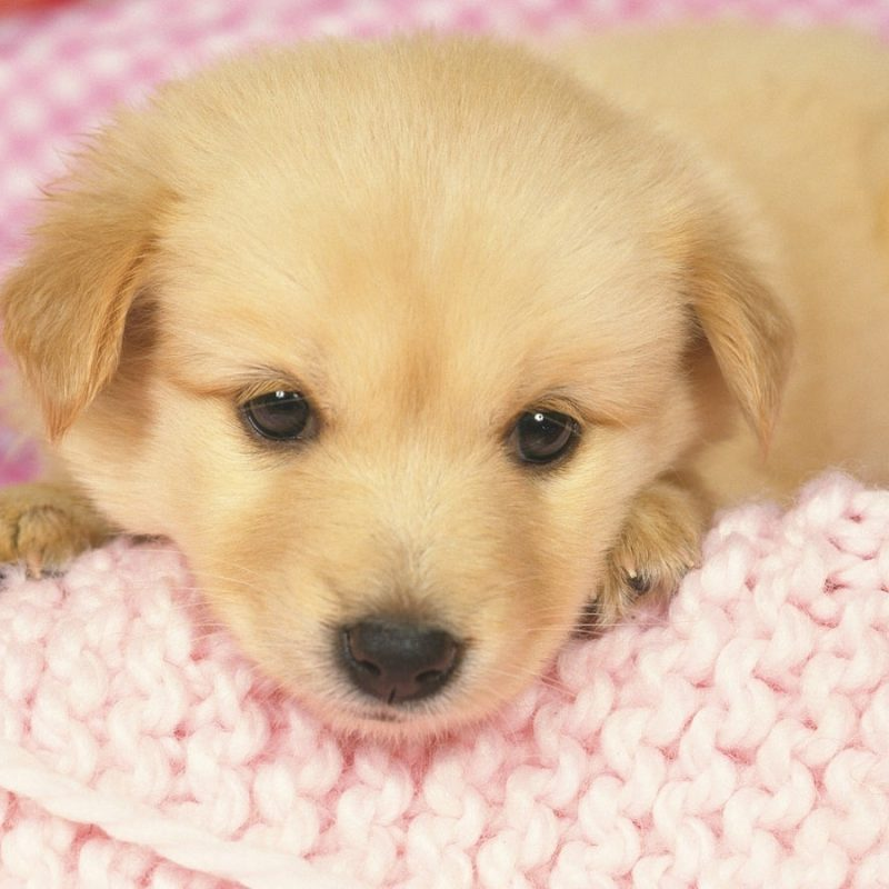 10 Latest Puppy Wallpapers For Free FULL HD 1920×1080 For PC Desktop 2018 free download fhdq wallpapers for free wallpapers and pictures graphics for 800x800