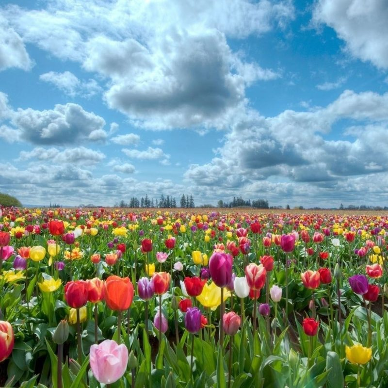 10 New Field Of Flowers Background FULL HD 1920×1080 For PC Desktop 2021 free download field of flowers background hd wallpapers field of flowers 800x800