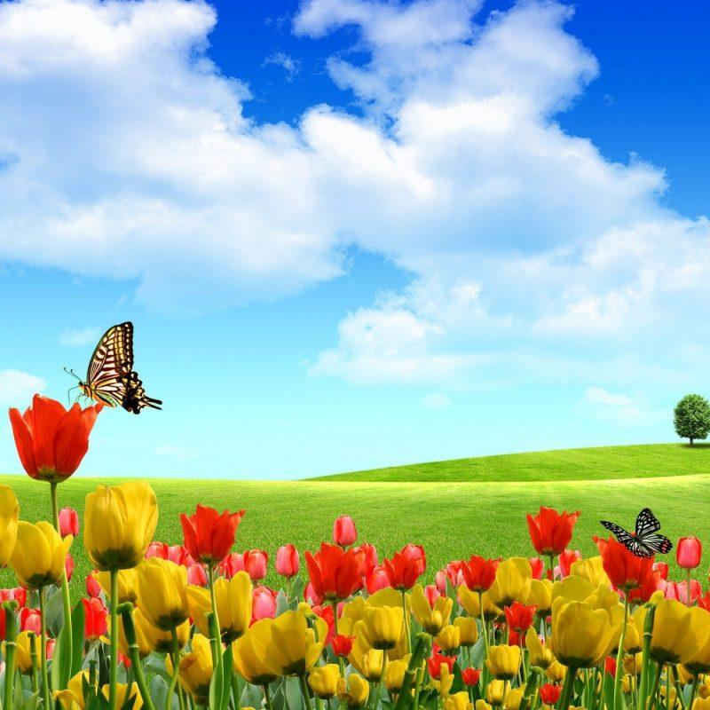 10 New Field Of Flowers Background FULL HD 1920×1080 For PC Desktop 2021 free download field of flowers wallpapers pixelstalk 800x800
