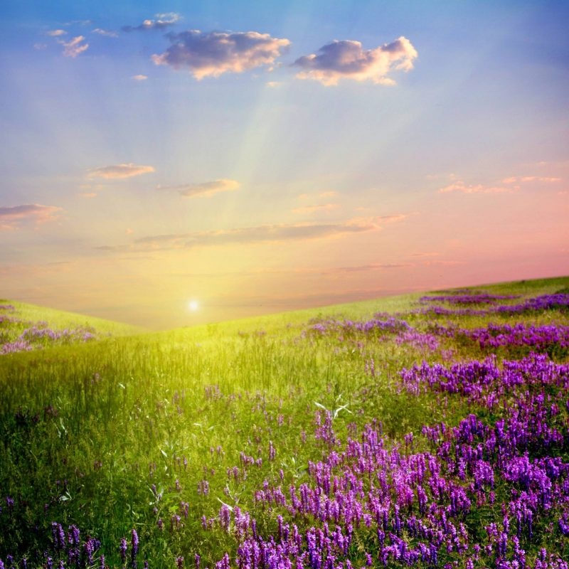 10 New Field Of Flowers Background FULL HD 1920×1080 For PC Desktop 2021 free download field of flowers wallpapers wallpaper cave 800x800