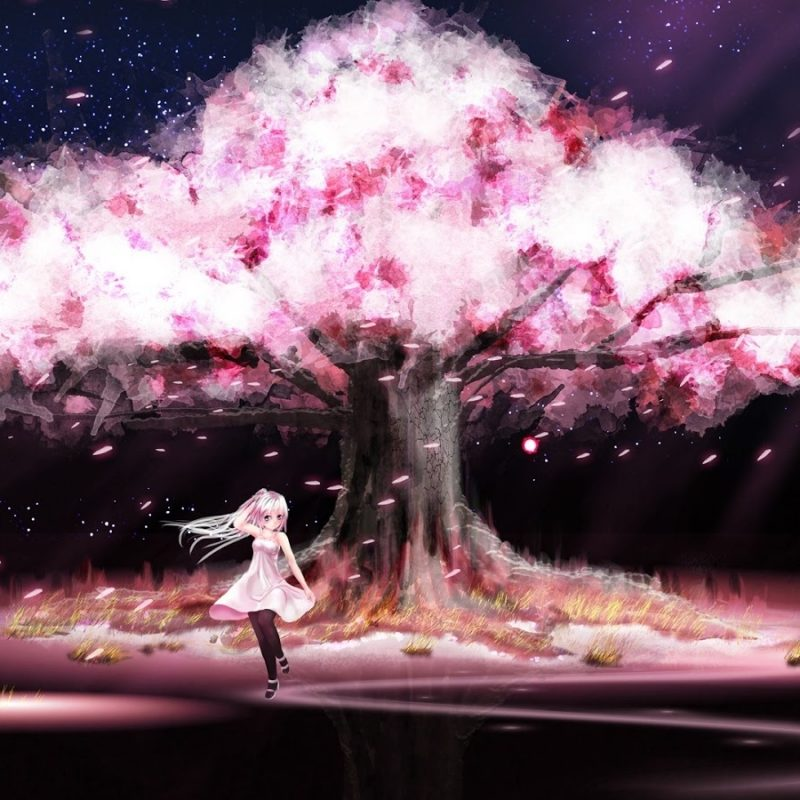 10 Most Popular Cherry Blossom Tree Anime Wallpaper FULL HD 1080p For PC Desktop 2018 free download file cherry blossoms trees dark dress night stars pink blue eyes 800x800