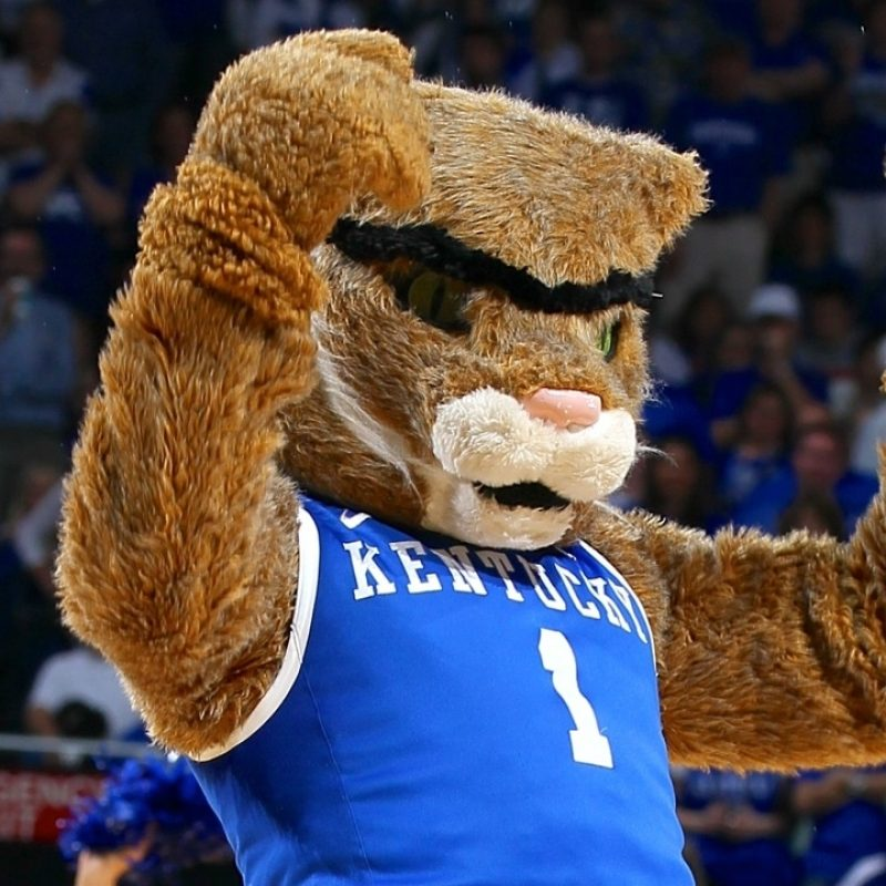 10 New Kentucky Wildcats Mascot Pictures FULL HD 1920×1080 For PC Desktop 2018 free download final four preview and picks wisconsin badgers vs kentucky wildcats 800x800