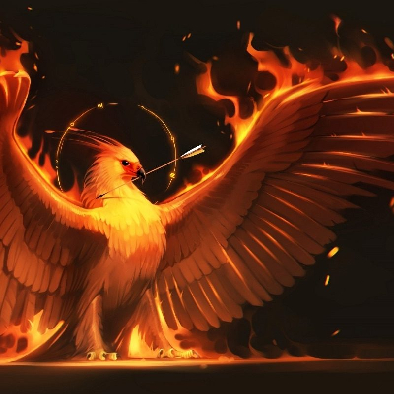 10 Most Popular Pics Of Phoenix Bird FULL HD 1920×1080 For PC Desktop 2018 free download fire arrow phoenix bird art wings fire birds fantasy flame fm30 800x800