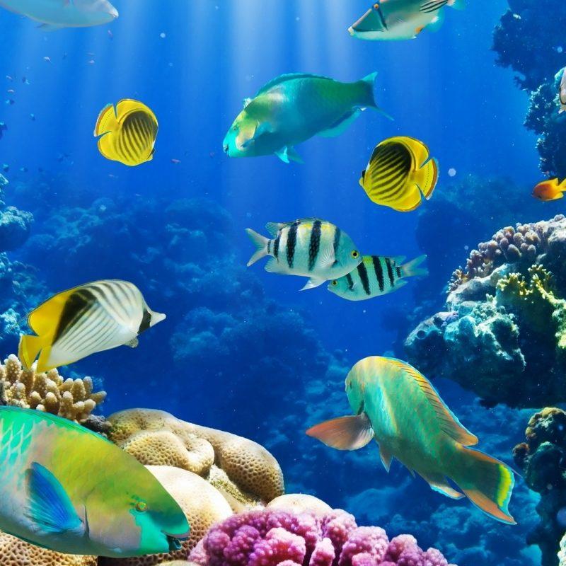 10 Best Tropical Fish Wallpaper Hd FULL HD 1080p For PC Desktop 2021 free download fish wallpapers hd pixelstalk 800x800