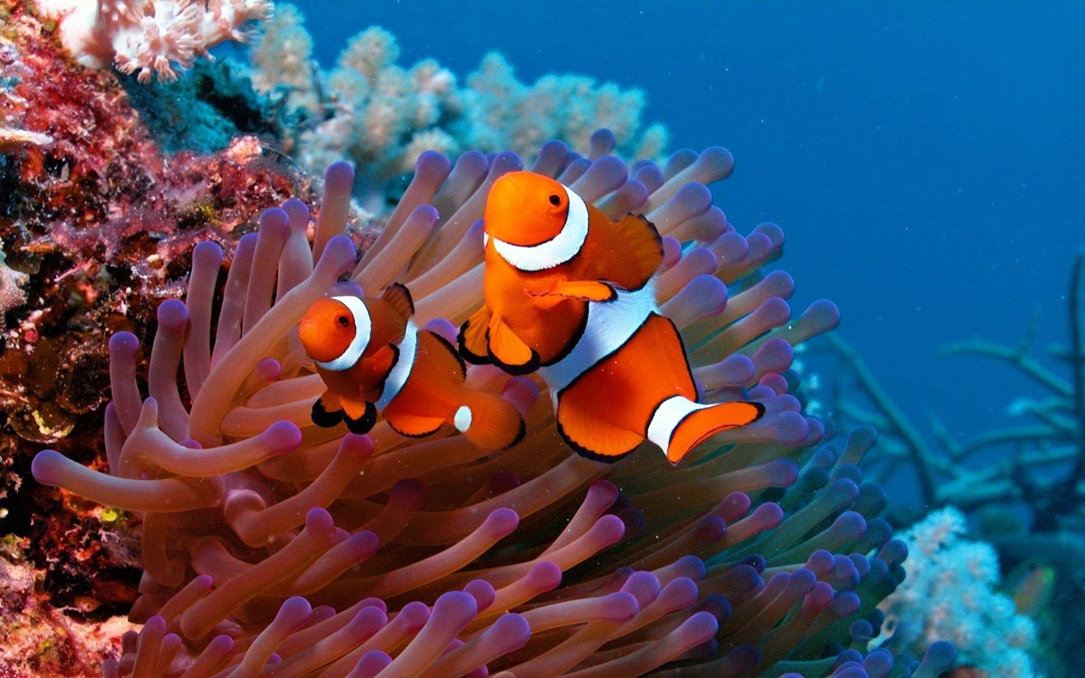 fishes: fish water ocean underwater fishes sea sealife pond