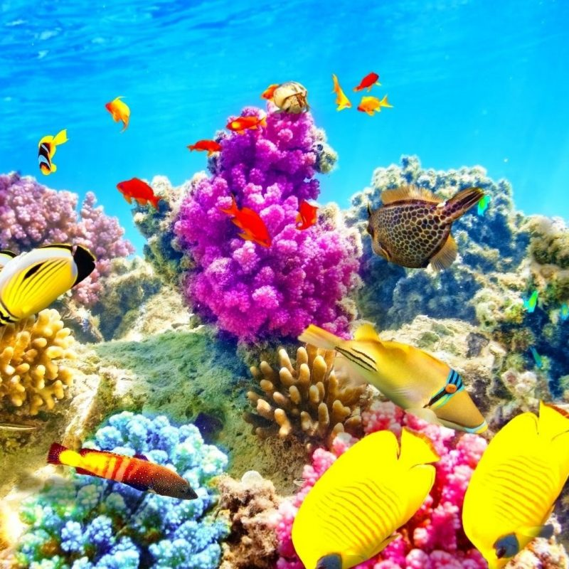 10 Most Popular Fish Backgrounds For Desktop FULL HD 1920×1080 For PC Background 2018 free download fishes wallpapers nature underwater coral ocean reef school 800x800