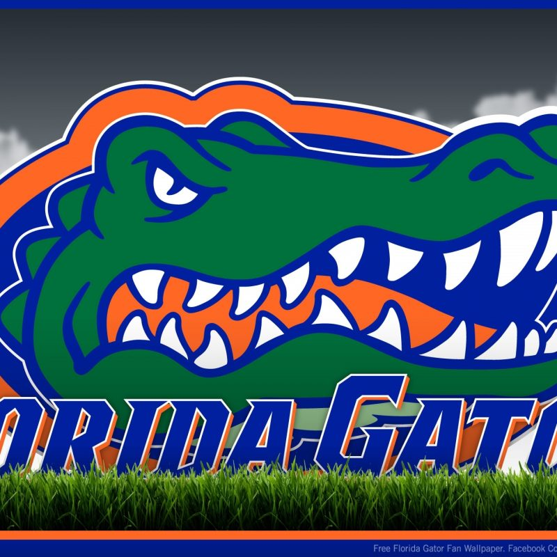 10 New Florida Gators Screen Savers FULL HD 1920×1080 For PC Desktop 2018 free download florida gator screensavers and wallpaper 67 images 2 800x800