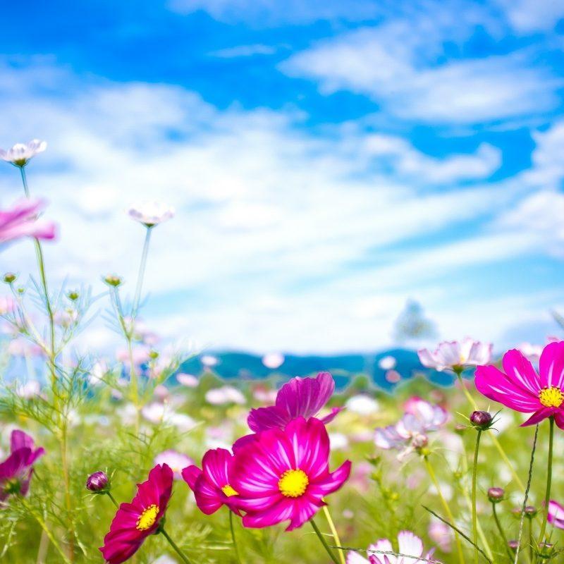 10 Top Desktop Flowers Wallpaper Backgrounds FULL HD 1080p For PC Background 2020 free download flower desktop backgrounds c2b7e291a0 800x800