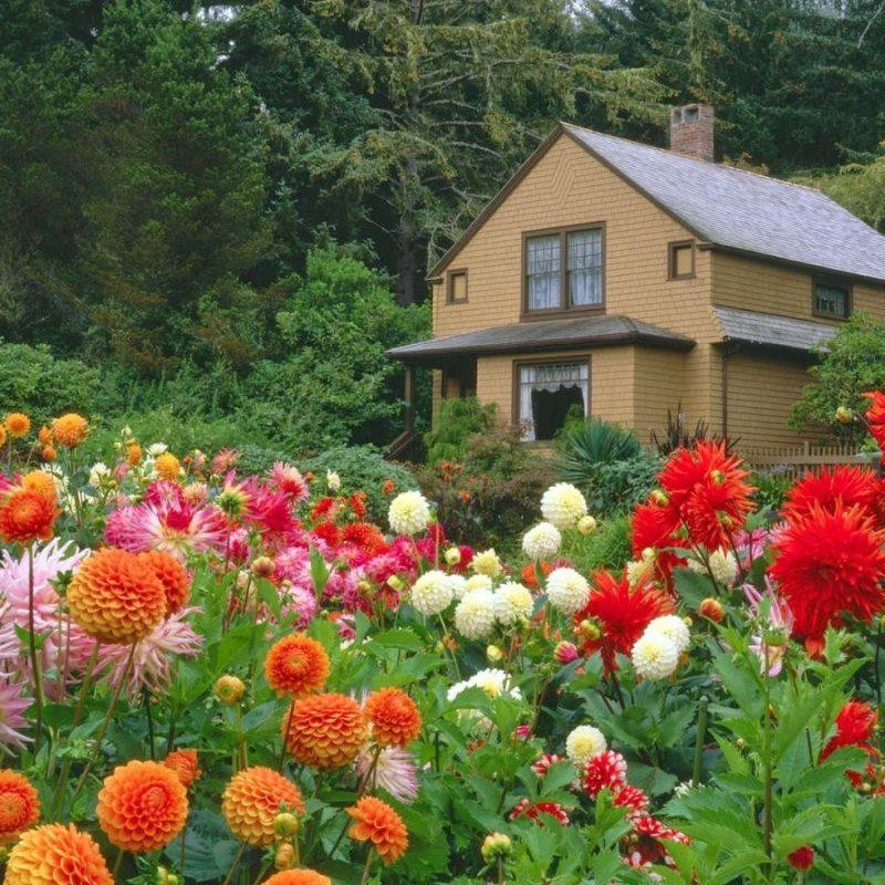 10 Top Free Flower Garden Wallpapers FULL HD 1920×1080 For PC Desktop 2021 free download flower garden wallpaper free downloadhttp refreshrose blogspot 1 800x800