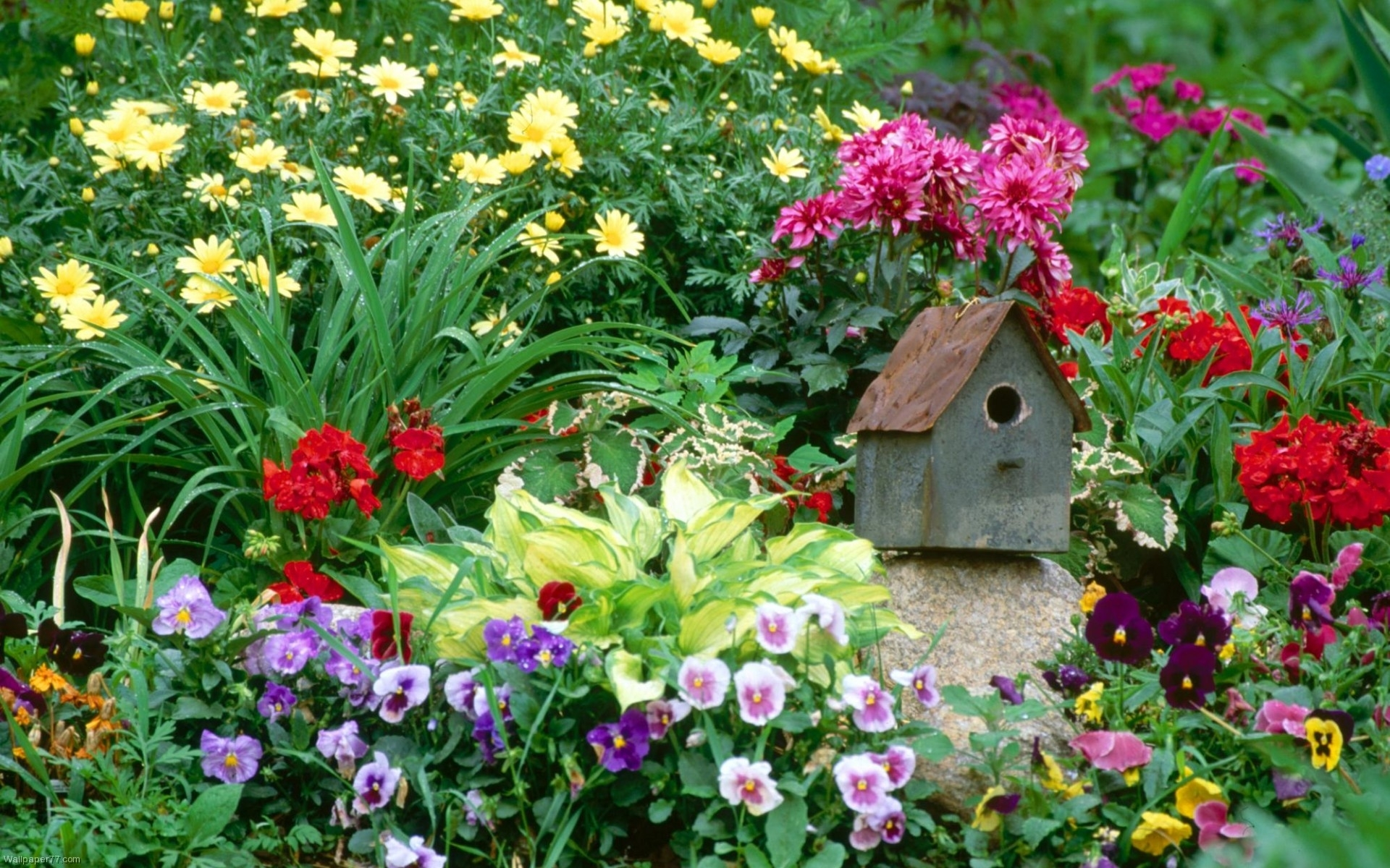 flower garden wallpapers | best wallpapers