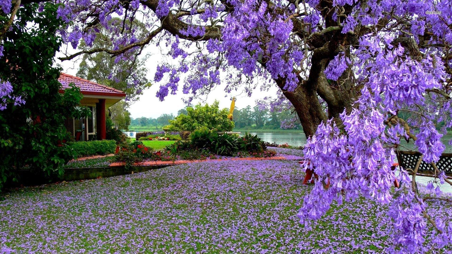 Title : Flower Garden Wallpapers   Best Wallpapers. Dimension : 1920 X  1080. File Type : JPG/JPEG