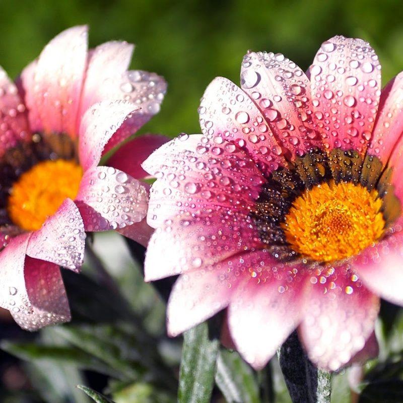 10 Top Beautiful Flower Wallpapers For Desktop Full Screen