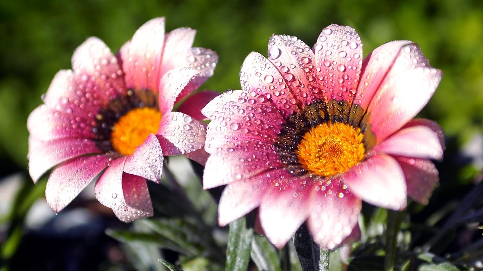 flower screen backgrounds   hd wallpapers   pinterest   wallpaper