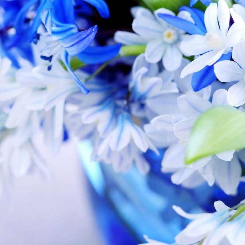 10 Most Popular Flowers Wallpapers For Desktop Full Size FULL HD 1080p For PC Background 2020 free download flower wallpaper desktop full size hd new for iphone elegant pixels 800x800