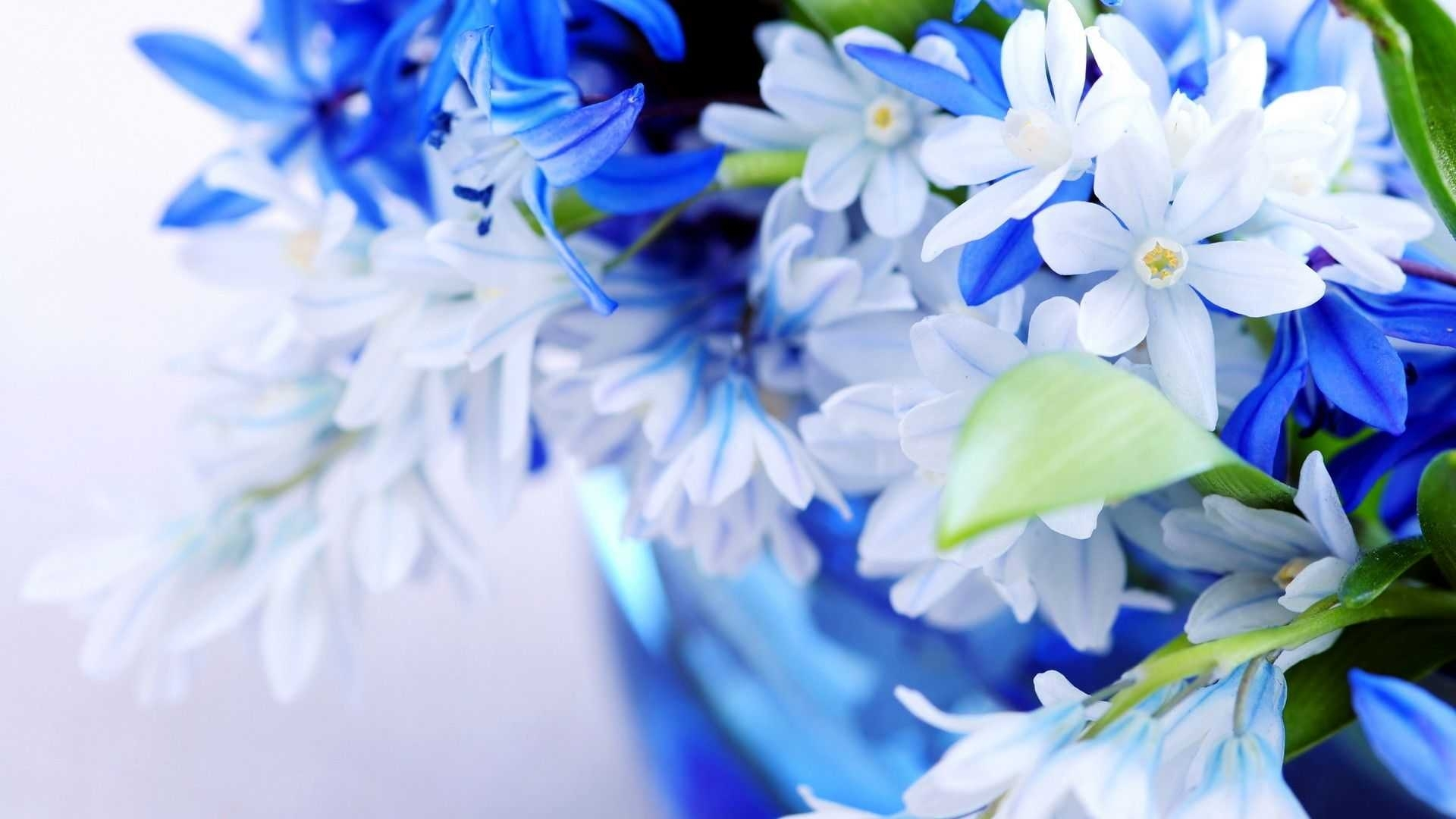 flower wallpaper desktop full size hd new for iphone elegant pixels