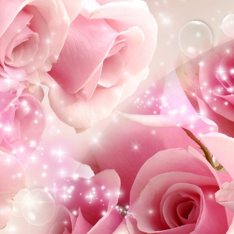 10 Best Pink Rose Background Wallpaper FULL HD 1920×1080 For PC Desktop 2018 free download flowers cool pink rose wallpapers desktop phone tablet awesome 800x800