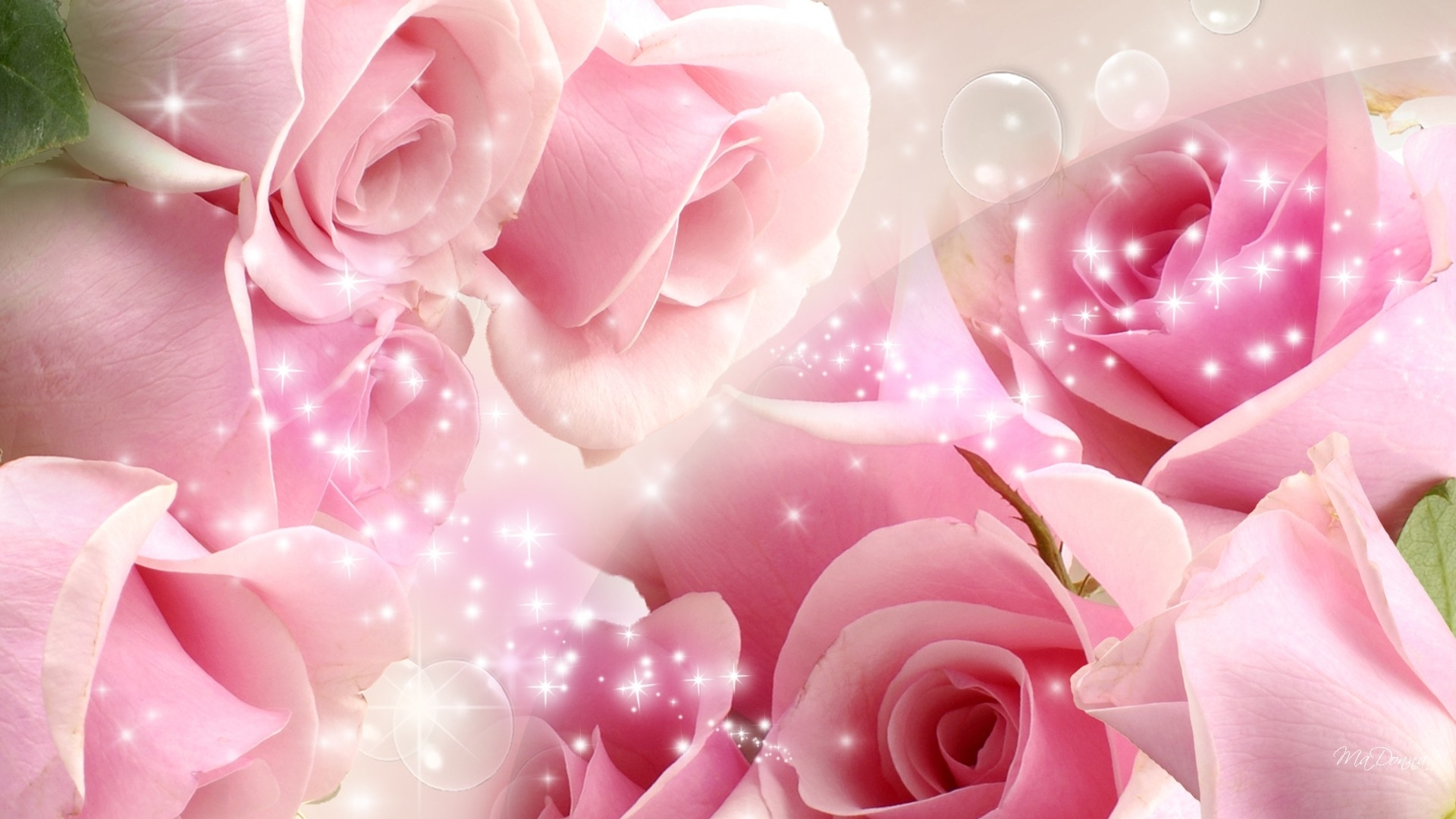 flowers cool pink rose wallpapers (desktop, phone, tablet) - awesome