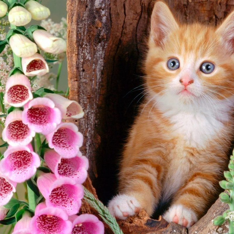 10 Latest Cat Wallpapers Free Download FULL HD 1920×1080 For PC Desktop 2021 free download flowers drawings for kids google zoeken cat n flowers 800x800
