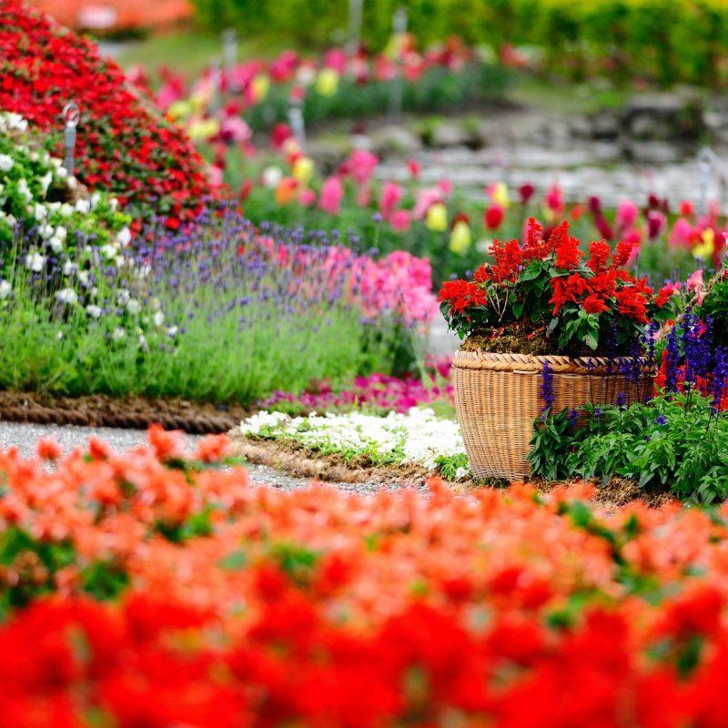 10 Top Flower Garden Hd Wallpaper FULL HD 1080p For PC