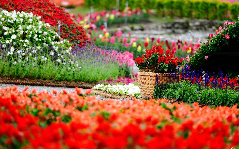 flowers-garden-hd-wallpapers-free-for-desktop - hd wallpaper