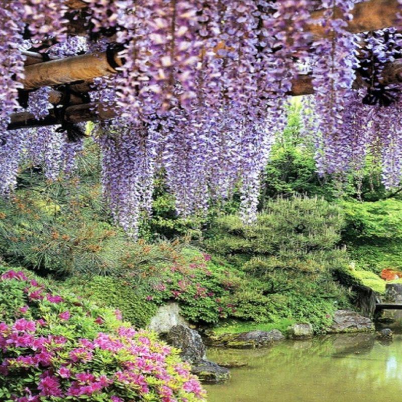 10 Top Free Flower Garden Wallpapers FULL HD 1920×1080 For PC Desktop 2021 free download flowers garden pond wisteria hd wallpapers free hd wallpaper 800x800