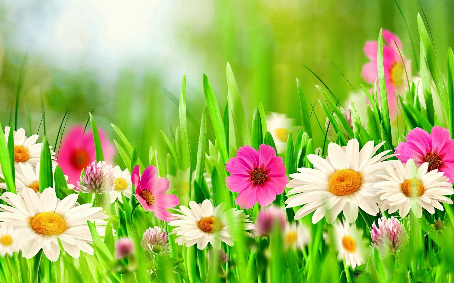 flowers: meadow flowers daisies grass spring flower wallpaper for