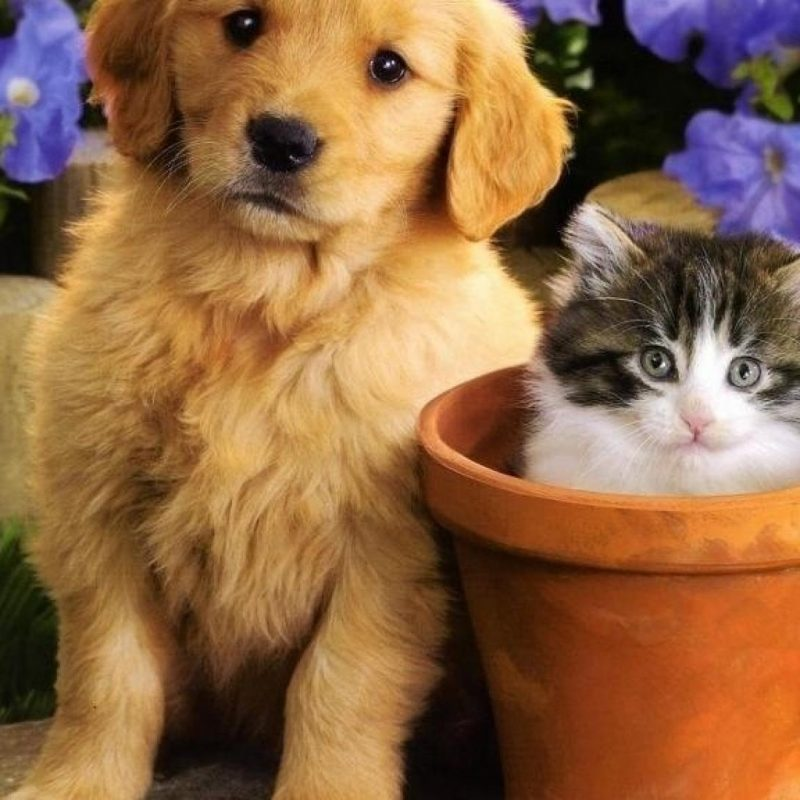 10 New Kitten And Puppies Wallpaper FULL HD 1080p For PC Desktop 2021 free download flowers puppies kittens wallpaper 10045 1 800x800