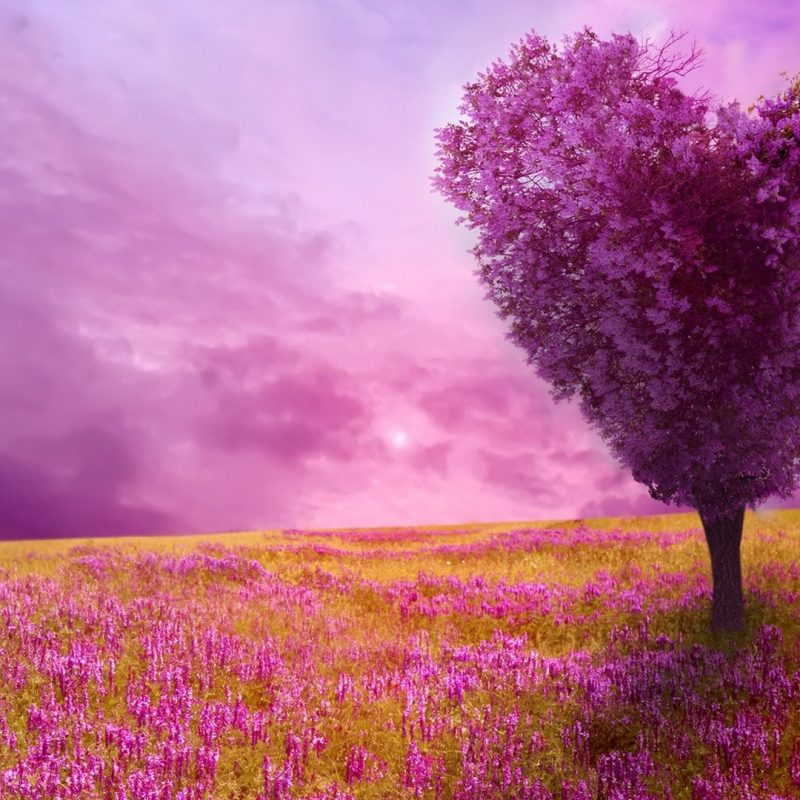 10 Best Hd Spring Wallpaper Backgrounds FULL HD 1920×1080 For PC Background 2020 free download flowers spring lover wallpapers desktop phone tablet awesome 800x800