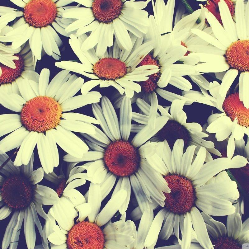 10 Best Desktop Backgrounds Flowers Vintage FULL HD 1080p For PC Desktop 2020 free download flowers vintage walldevil 800x800