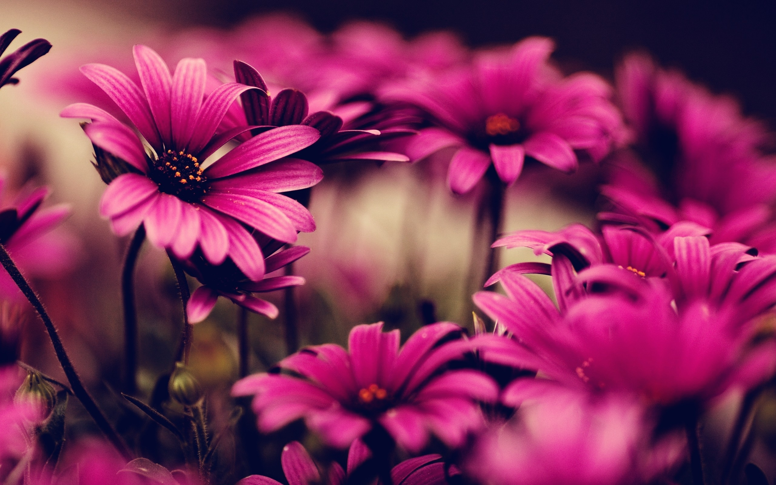 10 New Hd Desktop Backgrounds Flowers Full Hd 1080p For Pc Desktop