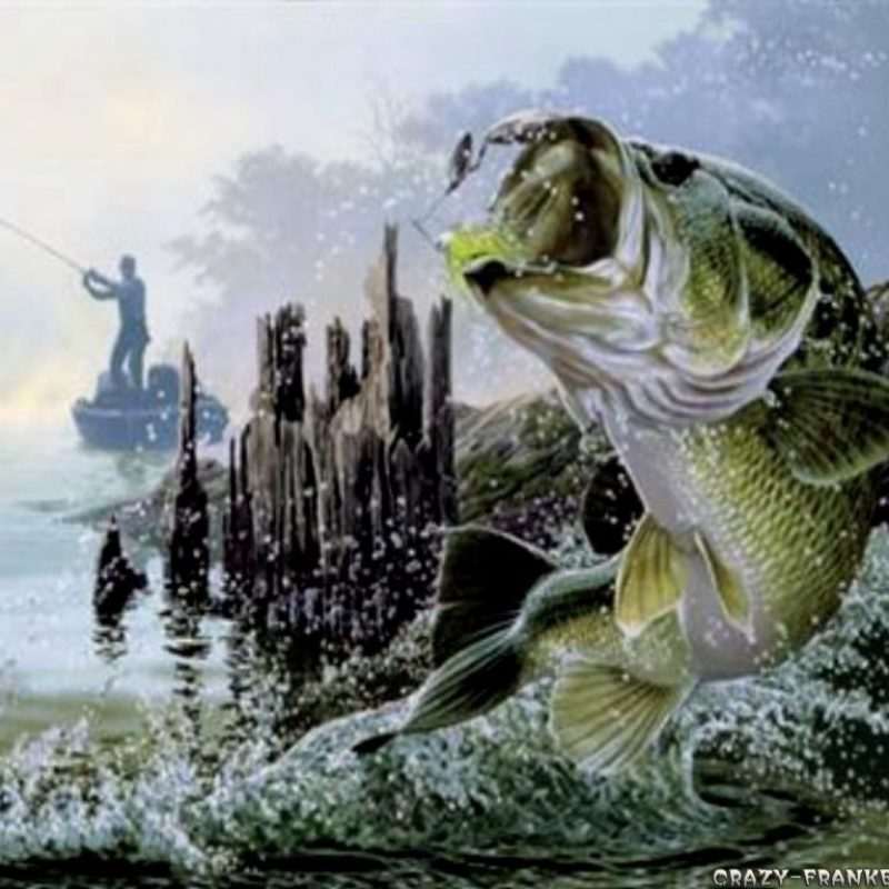 10 Latest Bass Fishing Wallpaper Hd FULL HD 1080p For PC Desktop 2021 free download fly fishing wallpapers wallpaper hd wallpapers pinterest wallpaper 1 800x800