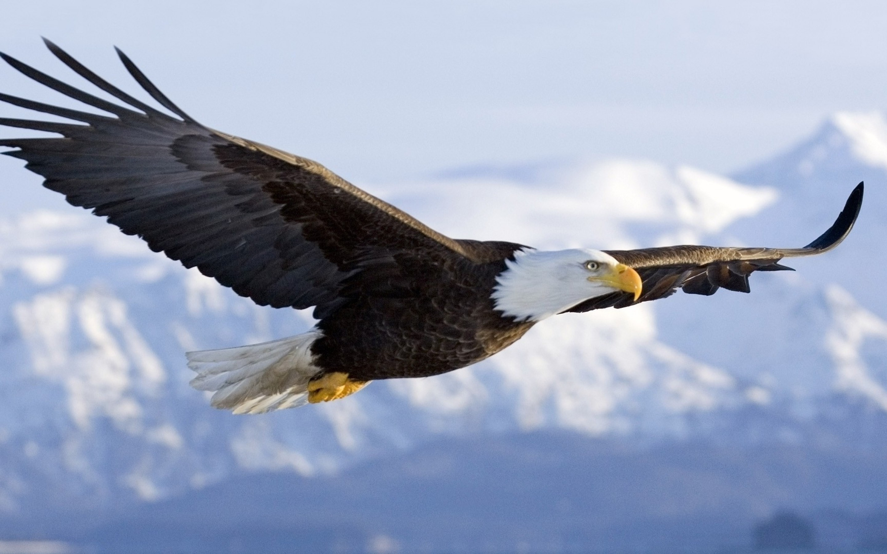 flying eagle in sky hd wallpaper | hd wallpapers