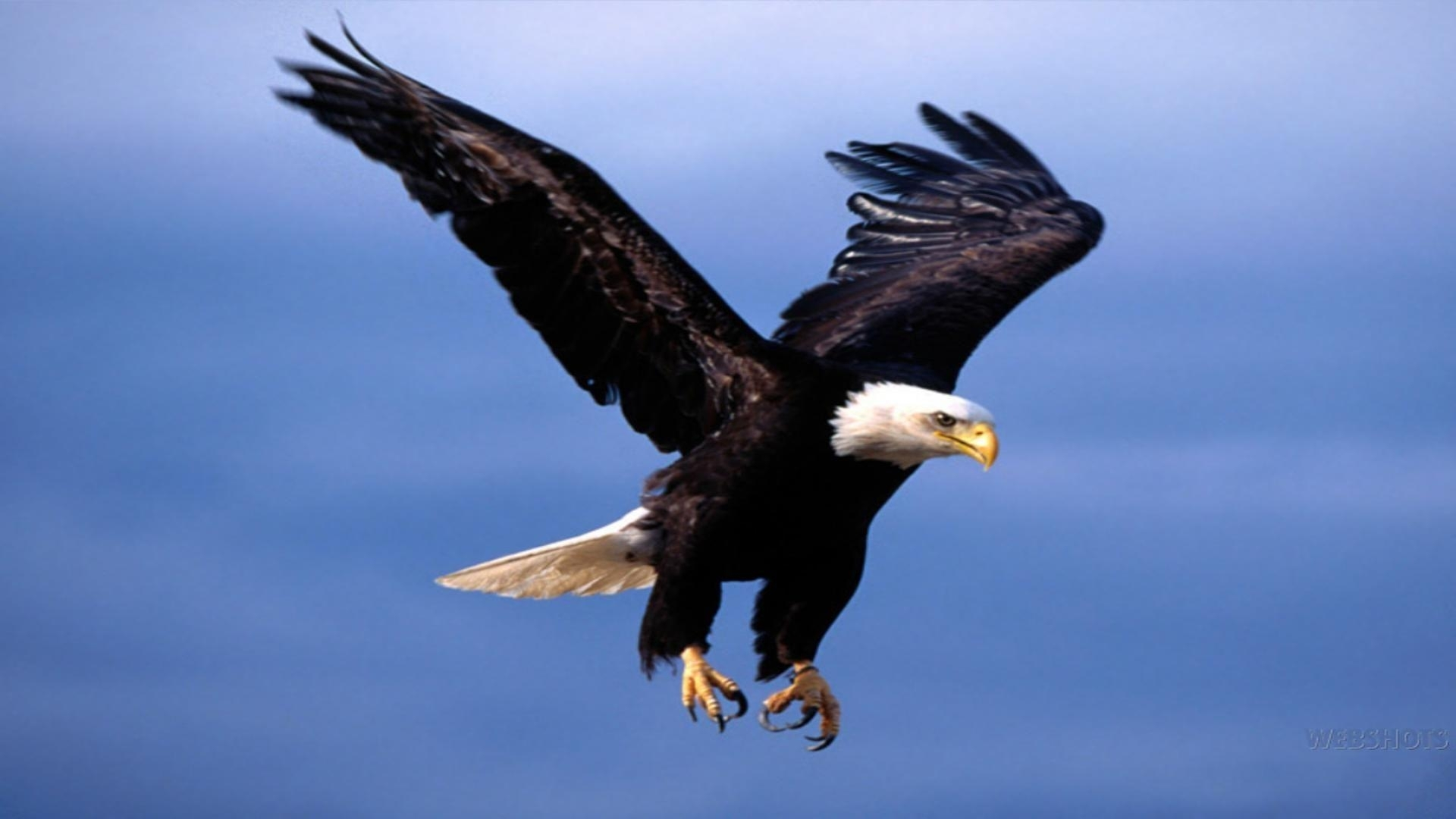 flying eagle wallpapers - wallpaper cave