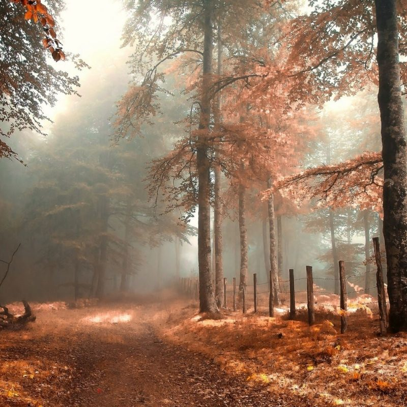 10 Best Autumn Forest Wallpaper Hd FULL HD 1920×1080 For PC Desktop 2021 free download foggy autumn forest nature wallpaper media file pixelstalk 800x800