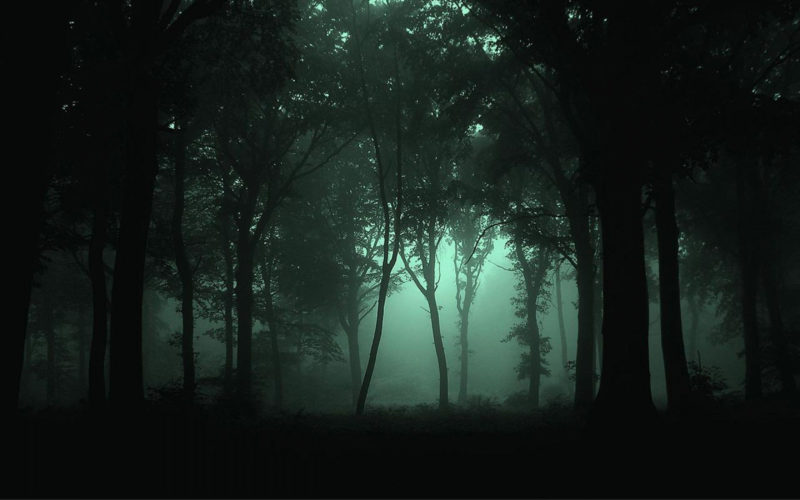 10 Most Popular Night Forest Wallpaper FULL HD 1920×1080 For PC Desktop 2020 free download foggy forest widescreen and full hd wallpapers fog mist 800x500