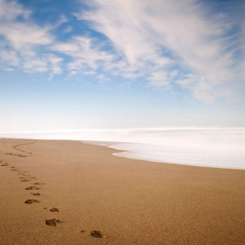 10 Best Footprints In The Sand Images Free FULL HD 1080p For PC Background 2021 free download footprints in the sand wallpapers wallpaper cave 2 800x800