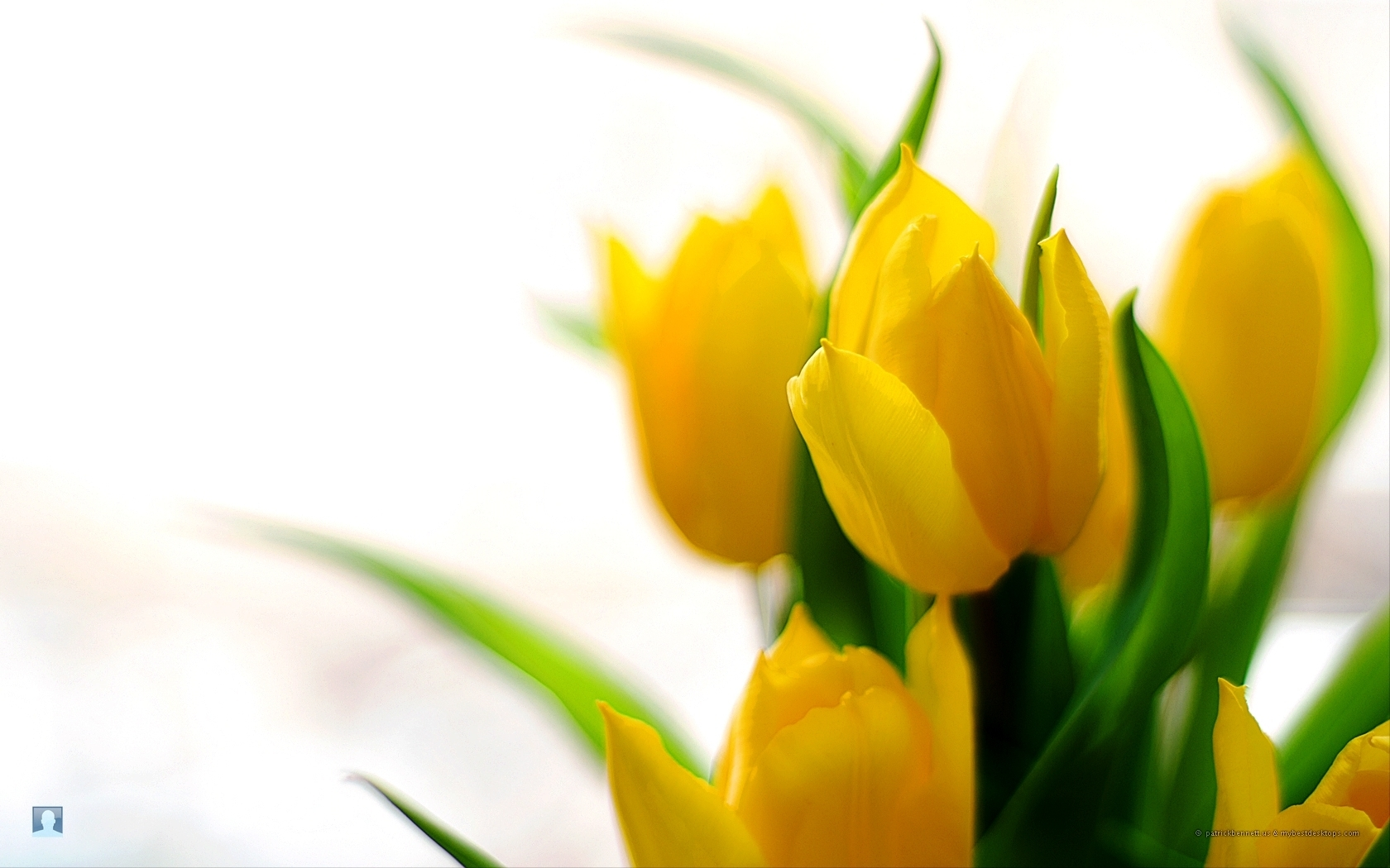 Title : for your desktop: spring flowers wallpapers, 43 top quality spring. Dimension : 1680 x 1050. File Type : JPG/JPEG
