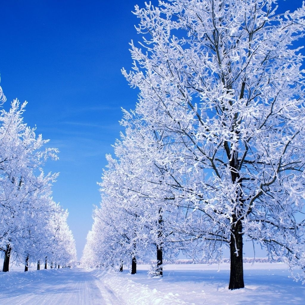 for your desktop winter nature wallpaper top quality winter | hd