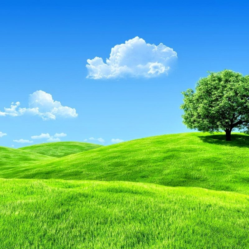 10 New Wallpapers For Laptop Full Screen FULL HD 1080p For PC Background 2021 free download forces of nature landscape sky splendor tree enchanting nature 800x800